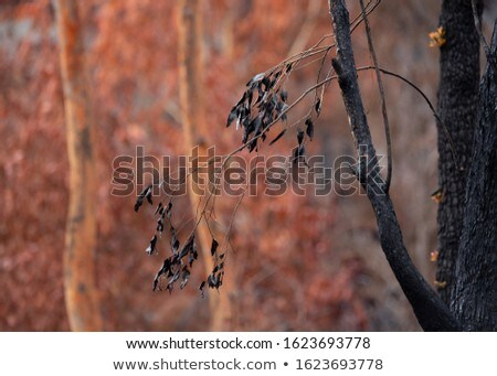 Burnt blackened leaves against a backdrop of browned leaves, aft Stock photo © lovleah