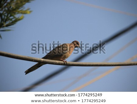 Pomba em pé belo pombo turva cidade Foto stock © samsem