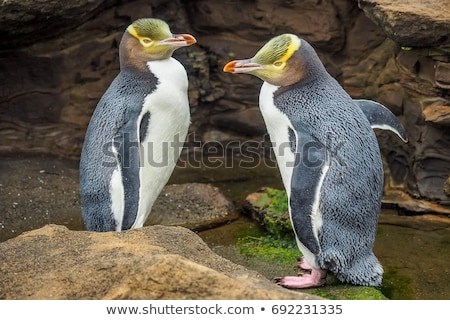 Stock photo: Yellow Eyed Penguin
