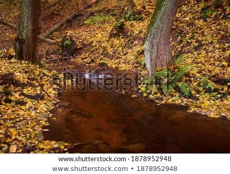 brook in autumn, Slovakia Stock photo © phbcz