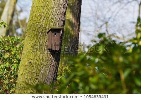 Vogels klein houten huis boom Stockfoto © smuki