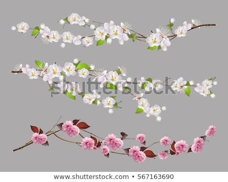 beyaz · çiçekler · kiraz · bahar · bahçe · mavi · gökyüzü · gökyüzü - stok fotoğraf © ptichka