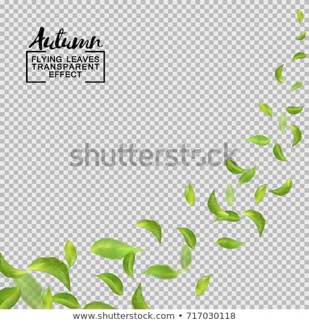 Luminoso banner colorato trasparente ufficio carta Foto d'archivio © adamson