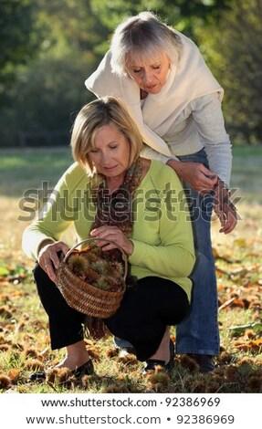 two seniors women gathering chestnuts Stock photo © photography33