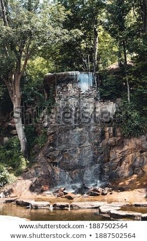Forestales verde isla árbol hierba Foto stock © dinozzaver