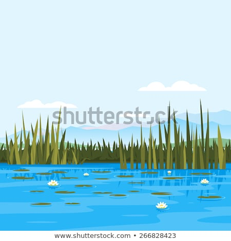 Landscape of lake with reeds  Stock photo © bbbar