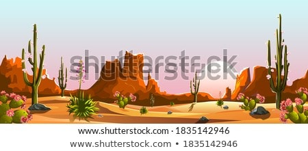 cacti in the desert stock photo © bluering