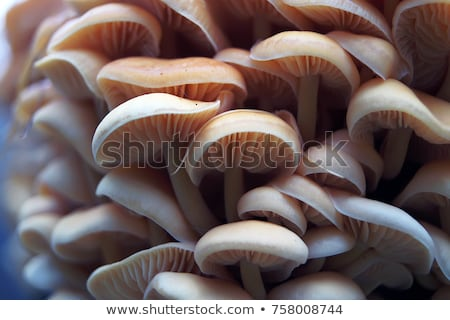 lots of mushrooms Stock photo © prill