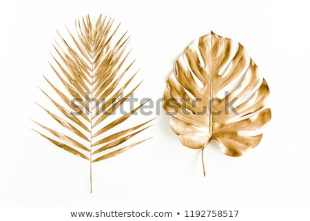 золото пальмовых листьев изолированный белый бизнеса бумаги Сток-фото © cammep