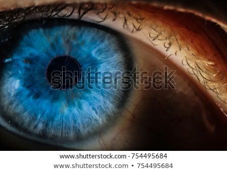 Close up of made up eye Stock photo © wavebreak_media