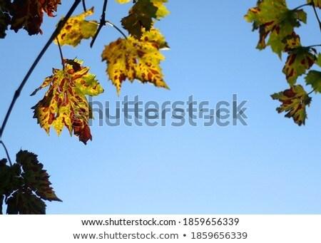 Stock fotó: Sekély · fókusz · fényes · piros · levelek · kék · ég