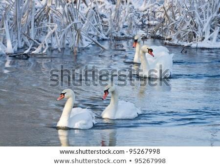 Stok fotoğraf: Kuşlar · dondurulmuş · nehir · görmek · manzara · ışık