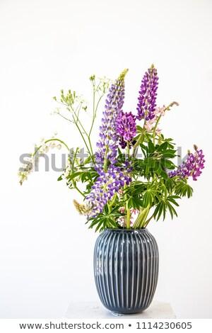 lupines in the vase Stock photo © almaje