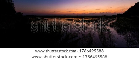 sunset 61 Stock photo © LianeM