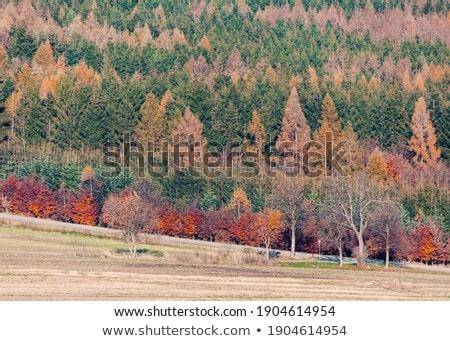 Landscape Image Of Beautiful Vibrant Lush Green Forest Woodland Zdjęcia stock © Artush