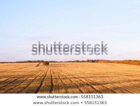Newly Cut Autumn Wheat Field In A Village In Moldova Foto stock © FrimuFilms