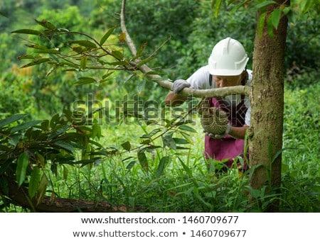 Jeans árvore mão homem verde Foto stock © szefei