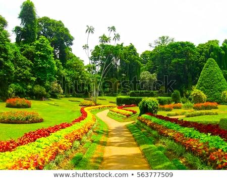 Jardin botanique belle fleurs arbres paysage beauté Photo stock © olira