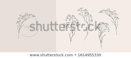 красивой природы Логотипы свадьба коллекция аннотация Сток-фото © SArts