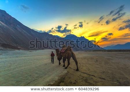 観光客 ライディング ラクダ 谷 インド ヒマラヤ山脈 ストックフォト © dmitry_rukhlenko