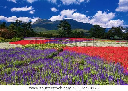 цветы · парка · цветок · горные · зеленый · назад - Сток-фото © wavebreak_media