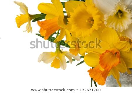 Fresche fiori metallico vaso stock foto Foto d'archivio © nalinratphi