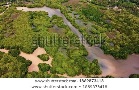 egzotik · yalnız · plaj · palmiye · ağaçları · okyanus · güzel - stok fotoğraf © joker