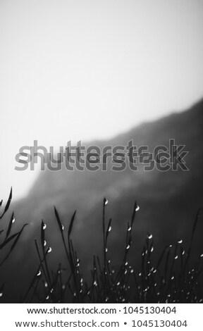 Sabah sis dağlar Georgia sonbahar manzara Stok fotoğraf © Kotenko