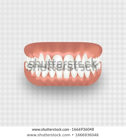 Realistic human tooth in pink gum isolated on white Stock photo © evgeny89