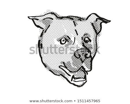 American Staffordshire Terrier Dog Breed Cartoon Retro Drawing Stock photo © patrimonio