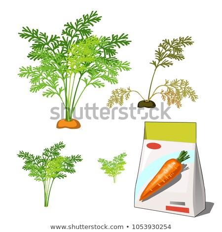 Vie agricole usine rouge carotte Photo stock © Lady-Luck