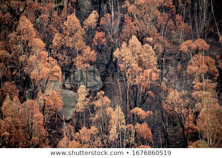 Lefelé néz bokor föld Ausztrália tűz föld Stock fotó © lovleah