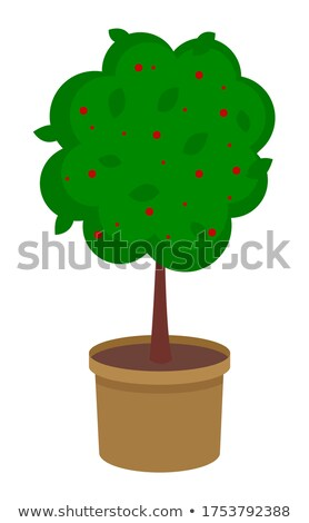 Isolated green tree growing in pot with soil, tree with flowers, decorative tree with soil raster Stock photo © robuart