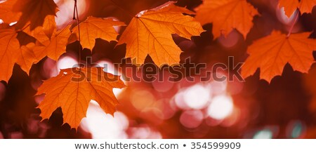 Rood blad boomstam zachte herfstkleuren focus Stockfoto © bobkeenan