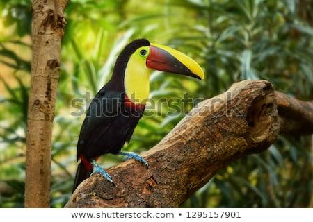Costa Rica central America verde negru Imagine de stoc © photoblueice
