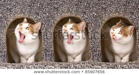 Gato ação gatos casa amor Foto stock © Ansonstock
