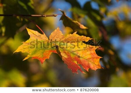 Herbst Blatt fallen Textur Wald Natur Stock foto © wjarek