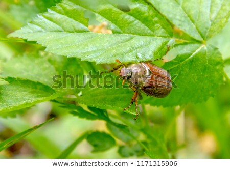 жук сидят веточка свежие листьев серый Сток-фото © prill