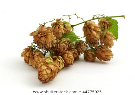 Green malt grape Stock photo © pekour