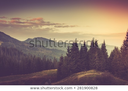 beautiful autumn forest on the mountain cliffs stock photo © justinb