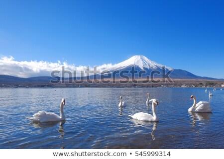 łabędź jezioro charakter krajobraz niebieski podróży Zdjęcia stock © yoshiyayo