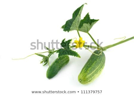 iki · yeşil · salatalık · beyaz · gıda · taze - stok fotoğraf © boroda