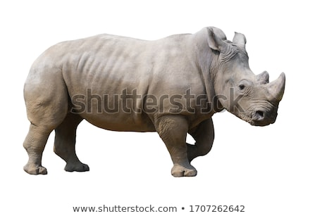 Rinoceronte alimentação jardim zoológico olho cara grama Foto stock © Beaust