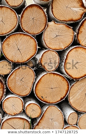 Birch logs in woodpile Stock photo © pzaxe