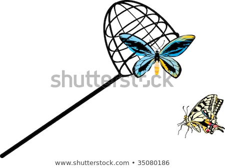 Stock photo: Black and white contour butterfly net