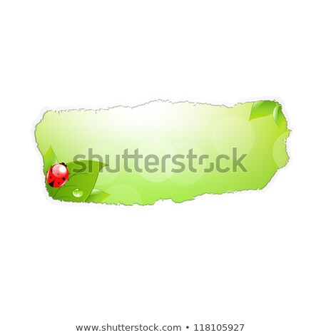 Papír lyuk levél katicabogár gradiens háló Stock fotó © barbaliss