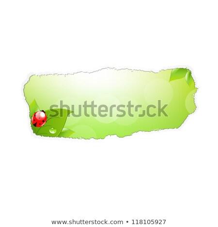 Papier trou feuille coccinelle gradient Photo stock © barbaliss