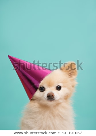 Köpek yavrusu parti İngilizce buldok fransız hediyeler Stok fotoğraf © willeecole