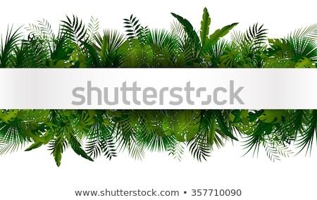 palmier · laisse · frontière · belle · fraîches - photo stock © lightsource