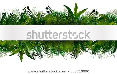 jungle border stock photo © lightsource